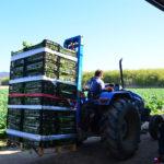 agricultors maresme