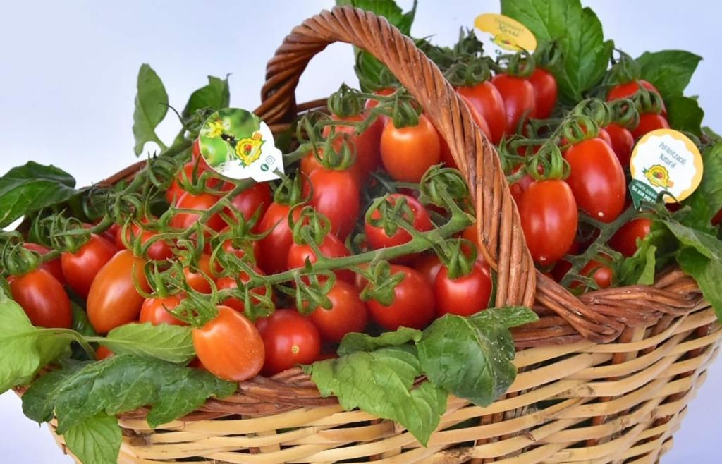 tomaquets de proximitat maresme
